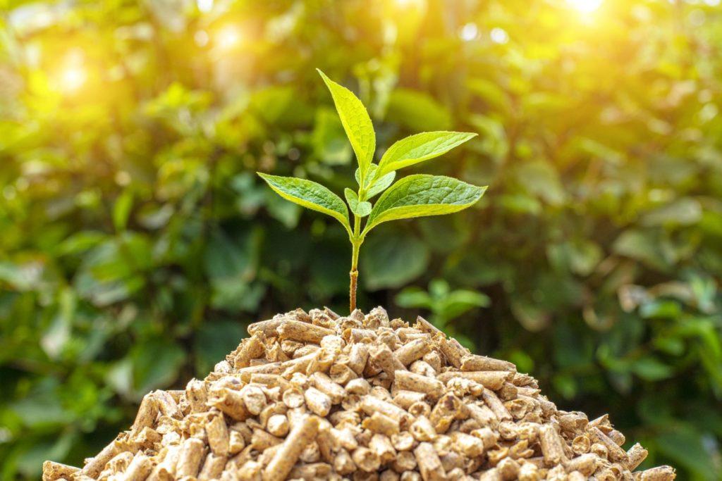 Eine grüne Pflanze wächst auf Biomasse
