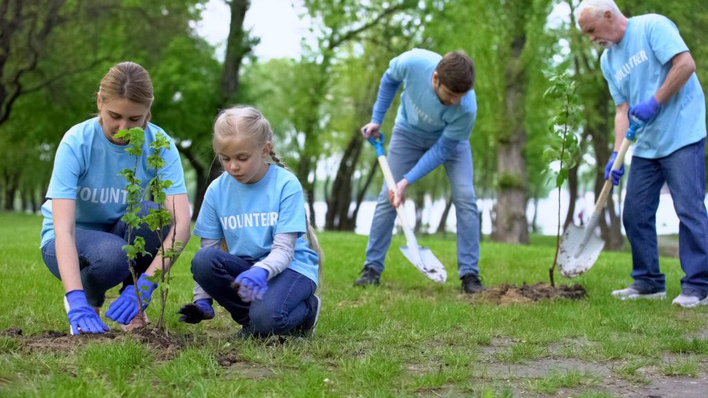 Freiwillige Baumspende
